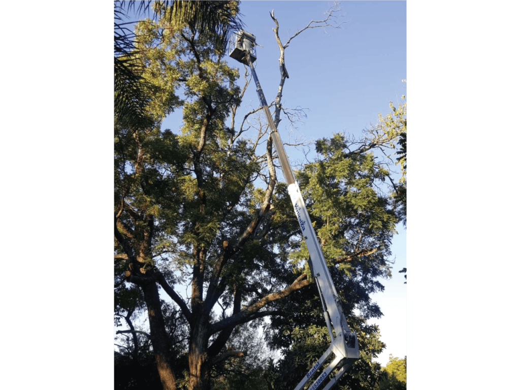 Tree-Felling-and-pruning